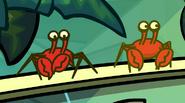 Paradise Crabs