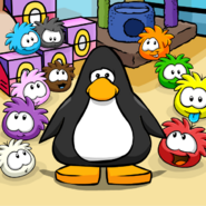 Pet Shop Puffles Background PC