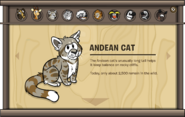 Endangered Animals Andean Cat