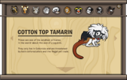 Endangered Animals Cotton Top Tamarin