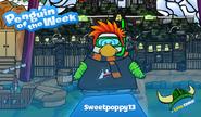 Penguin of the Week 78 - Sweetpoppy13 - Club Penguin Rewritten