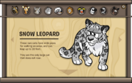 Endangered Animals Snow Leopard