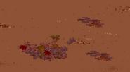 Dirt & Leaves Floor IG