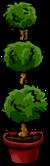 Poodle Plant