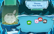 Pufflescape Puffle Selection