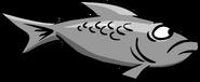 Grey fish swimming