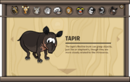 Endangered Animals Tapir