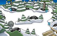 Instrument Hunt 2020 Forest