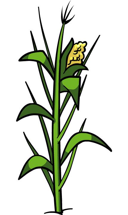 Corn Plant image - corn plant | club penguin wiki | fandom poweredwikia