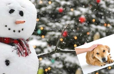 Snowman dog petting christmas