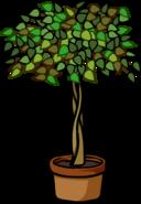 Ficus Plant sprite 001