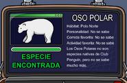 Oso polar info