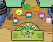 Rainbow puffle glitch