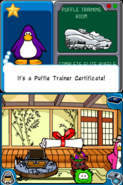 Puffle certificate reward