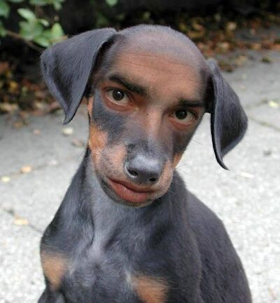 Weird-Dog-1058