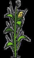 130px-Corn Plant