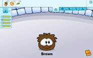 Brown Puffle caring card