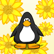 Sunflowers background on a Player Card