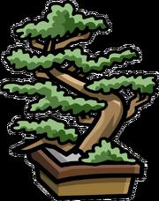 Dojo Bonsai Tree