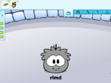 List of Glitches on Club Penguin