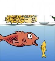 Club-penguin-fish-secret-code-cheat-269x300