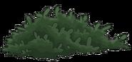 Arbusto verde oscuro opaco