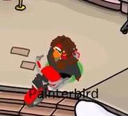 Painterbird en una moto