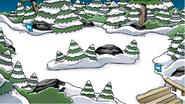 El Bosque Mayo 18, 2007 - Abril 21, 2010
