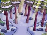 Wilderness (room)