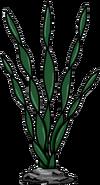 Alga Marina 0
