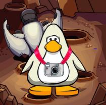 Pingu Rares