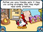 Pet Shop owner advice