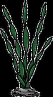 Alga Marina icono