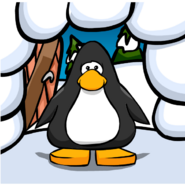 Igloo Door Background on a Player Card