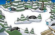 El Bosque Abril 21, 2010 - Junio 17, 2010