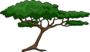 Acacia icono