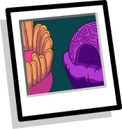 Reef Background icon