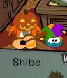 Shibe o shaib
