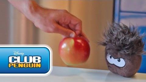 Australia Video Blog Puffle Problems? Let's Ask PH - Official Club Penguin