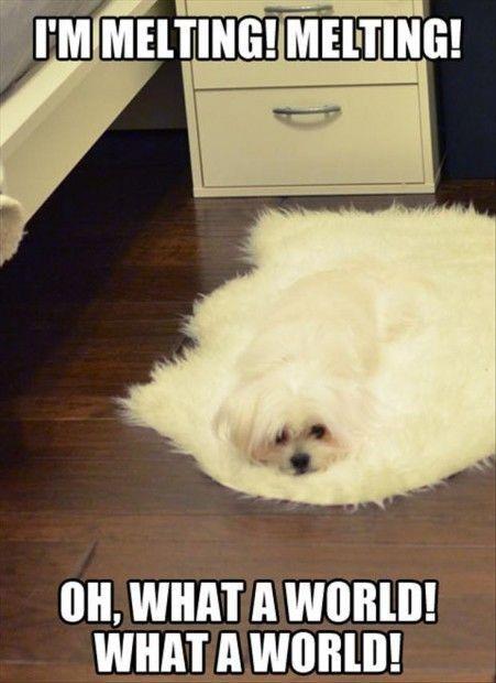 latest?cb=20150912132031 image funny animal memes jpg club penguin pookie wiki fandom,Funny Animal Memes