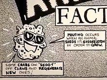 Spongebob 1986
