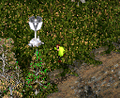 Valdez Screenshot.PNG