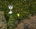 Valdez Screenshot