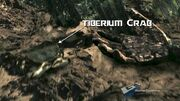 Tiberium carb