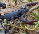 Scorpion (animal)