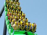 Stand-Up Roller Coaster
