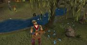 Lumbridge Musician