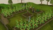 180px-Farminghighdetail