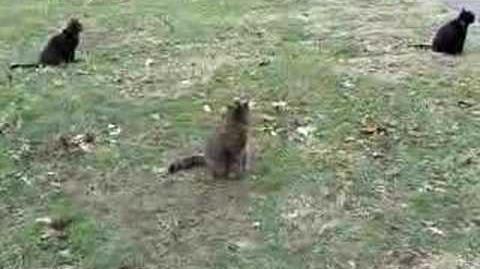 An entertaining cat video.