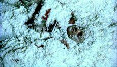 Cold Case S01E12 Glued